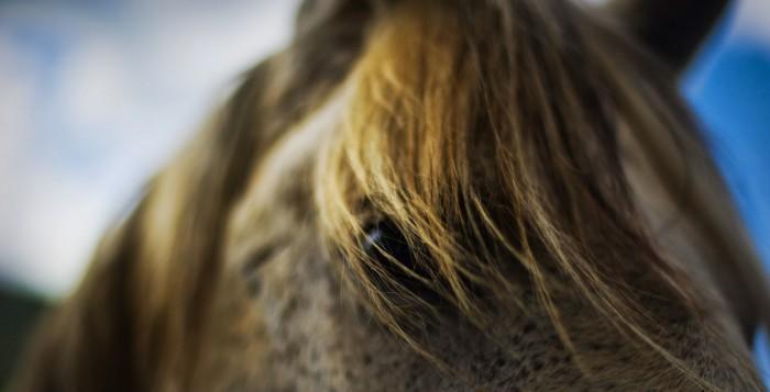 El champú de caballo contribuye a evitar la rotura del pelo